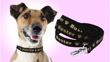 Small Personalised Lurex Dog Collar & Lead