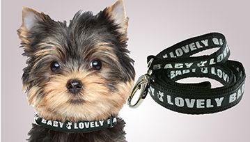 XSmall Personalised Lurex Dog Collar & Lead